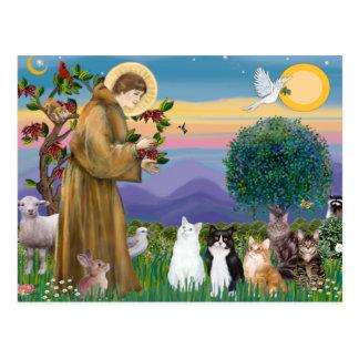 Hermana Frances que bendice 5 gatos Postales