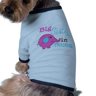 Hermana grande en elefante del entrenamiento camisetas de perro