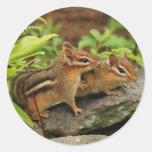 Hermanos cariñosos del Chipmunk del bebé Pegatina Redonda
