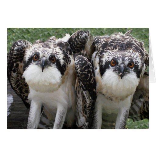 Hermanos de Osprey Tarjeta De Felicitación