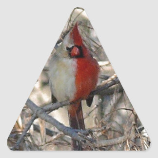hermaphadite cardinal bird triangle sticker
