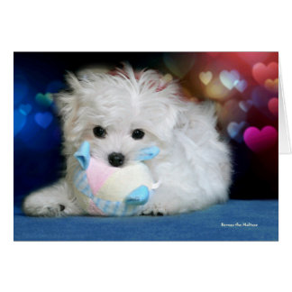 Hermes the Maltese Birthday Greeting Card