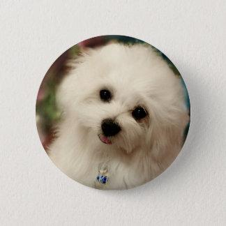 Hermes the Maltese Pinback Button