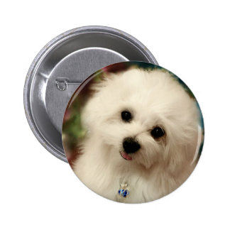 Hermes the Maltese Pinback Button