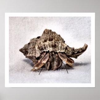 Hermit crab 1 print