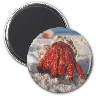 Hermit Crab 2 Inch Round Magnet