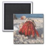 Hermit Crab 2 Inch Square Magnet