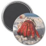 Hermit Crab 3 Inch Round Magnet