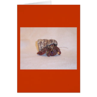 Hermit Crab 6 Greeting Cards