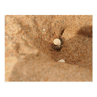 Hermit crab and sands postcard