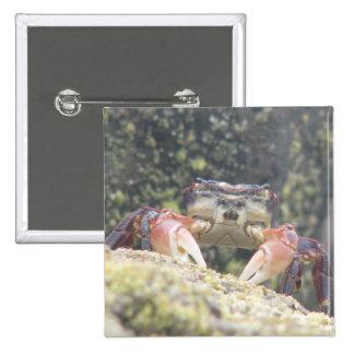 Hermit Crab Pin