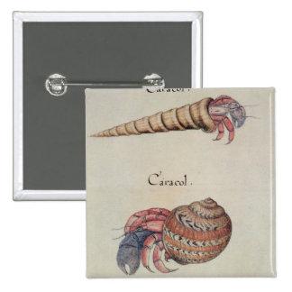 Hermit Crab Pinback Button