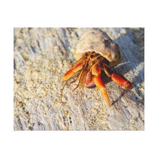 Hermit Crab Canvas Print