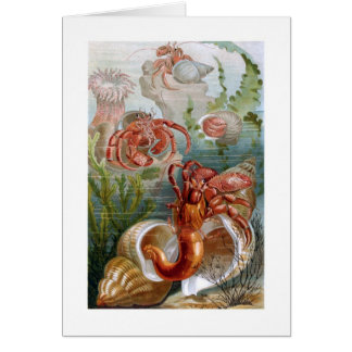 Hermit Crab Greeting Cards