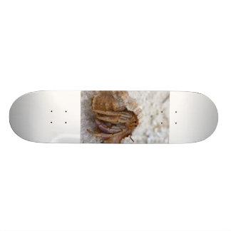 hermit-crab-care skateboard deck
