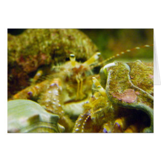 Hermit Crab Couple Card