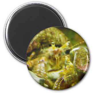 Hermit Crab Couple Magnet