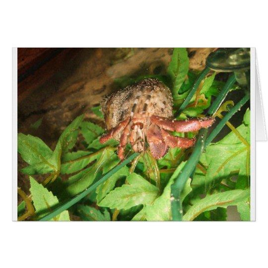 Hermit Crab Fun Card