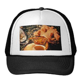 Hermit Crab in Hermit Crab Sponge Hats