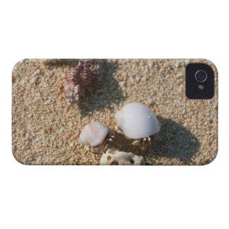 Hermit crab iPhone 4 case