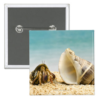 Hermit crab looking at larger shell 2 inch square button