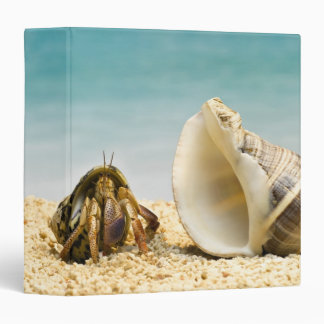 Hermit crab looking at larger shell 3 ring binder