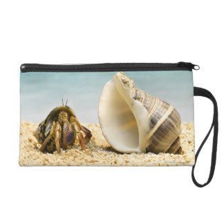 Hermit crab looking at larger shell wristlet clutches