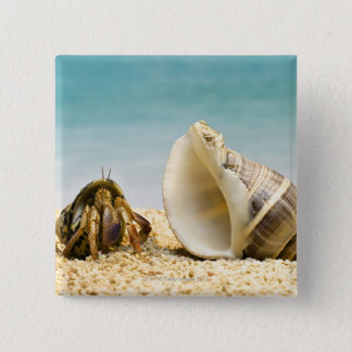Hermit crab looking at larger shell button