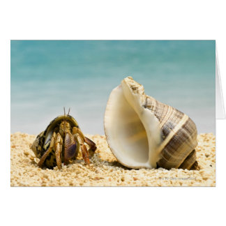 Hermit crab looking at larger shell greeting card