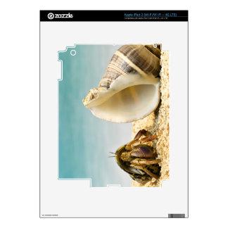 Hermit crab looking at larger shell iPad 3 skin