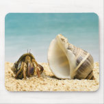 Hermit crab looking at larger shell mouse pad