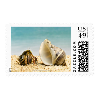 Hermit crab looking at larger shell postage stamp