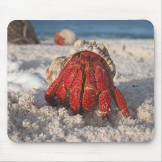 Hermit Crab Mouse Pad
