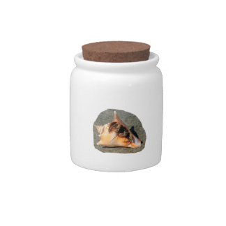 Hermit Crab on Sand Coming out of shell Candy Jar