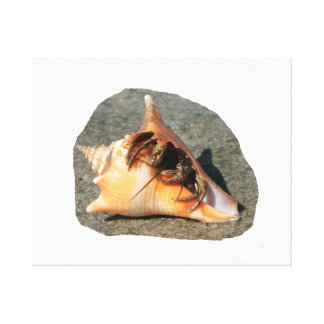 Hermit Crab on Sand Coming out of shell Gallery Wrapped Canvas
