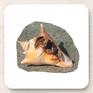 Hermit Crab on Sand Coming out of shell Coaster