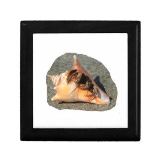 Hermit Crab on Sand Coming out of shell Gift Box