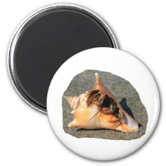 Hermit Crab on Sand Coming out of shell Refrigerator Magnets