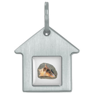 Hermit Crab on Sand Coming out of shell Pet Tags