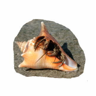 Hermit Crab on Sand Coming out of shell Photo Sculptures