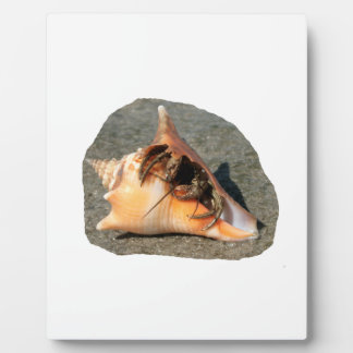Hermit Crab on Sand Coming out of shell Display Plaque