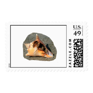 Hermit Crab on Sand Coming out of shell Postage