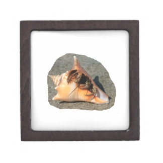 Hermit Crab on Sand Coming out of shell Premium Jewelry Boxes