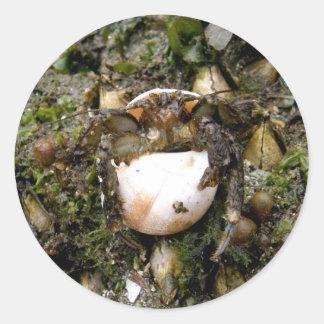 Hermit Crab on Unalaska Island Round Stickers