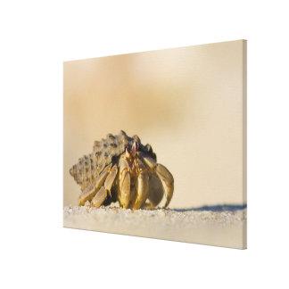 Hermit Crab on white sand beach of Isla Carmen, Canvas Print