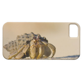 Hermit Crab on white sand beach of Isla Carmen, iPhone SE/5/5s Case