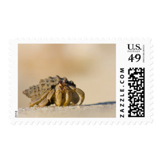 Hermit Crab on white sand beach of Isla Carmen, Postage Stamps