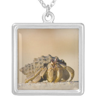 Hermit Crab on white sand beach of Isla Carmen, Square Pendant Necklace