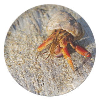 Hermit Crab Party Plate