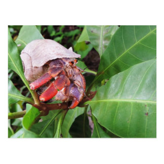Hermit Crab Postcard
